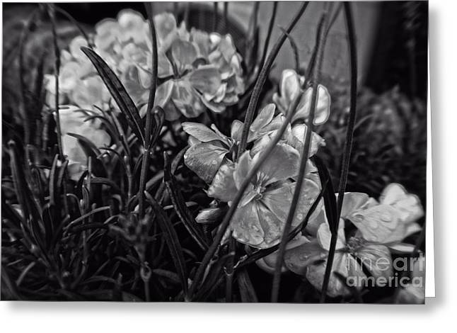 Beautiful Floral Blossoms Greeting Card by Michael Braham