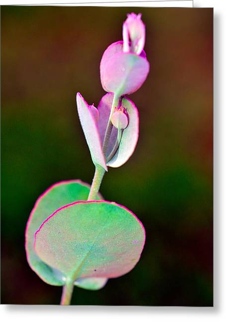 Single Mixed Media Greeting Cards - Beautiful   Flower Pink And Green Greeting Card by Toppart Sweden