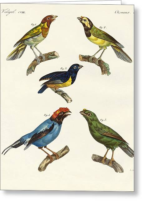 Nashville Drawings Greeting Cards - Beautiful foreign birds Greeting Card by Splendid Art Prints