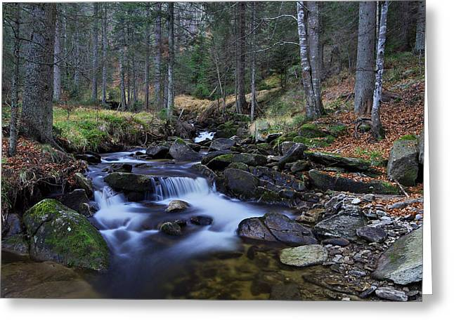 Stream Greeting Cards - Beautiful forest stream Greeting Card by Ivan Slosar