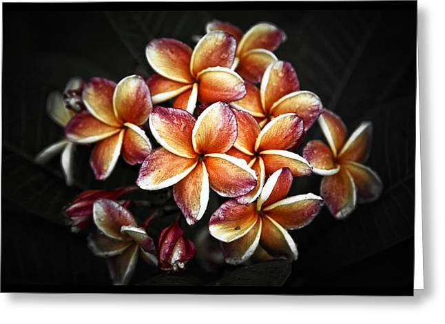 Pink Flower Prints Pyrography Greeting Cards - Beautiful Frangipani Plumeria  flower Greeting Card by Benjamin Dupont