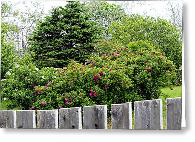 Roses Behind Fences Greeting Cards - Beautiful Front Yard - Roses - Trees Greeting Card by Barbara Griffin