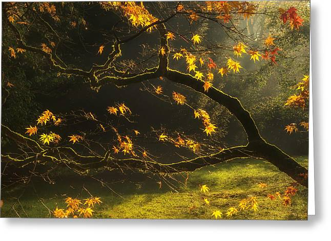 Golden Brown Greeting Cards - Beautiful golden Autumn leaves with bright backlighting from sun Greeting Card by Matthew Gibson