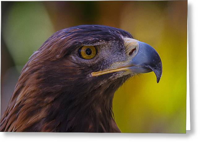 Golden Brown Greeting Cards - Beautiful Golden Eagle Greeting Card by Garry Gay