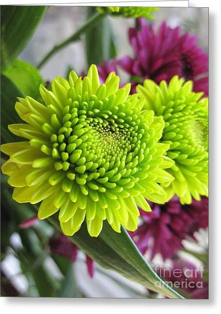 Layers Greeting Cards - Beautiful Green And Purple Chrysanthemums Greeting Card by Tara  Shalton