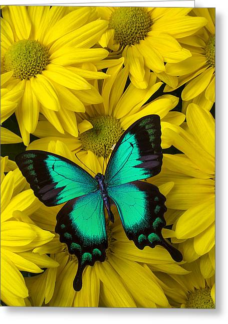 Antenna Greeting Cards - Beautiful Green Butterfly Greeting Card by Garry Gay