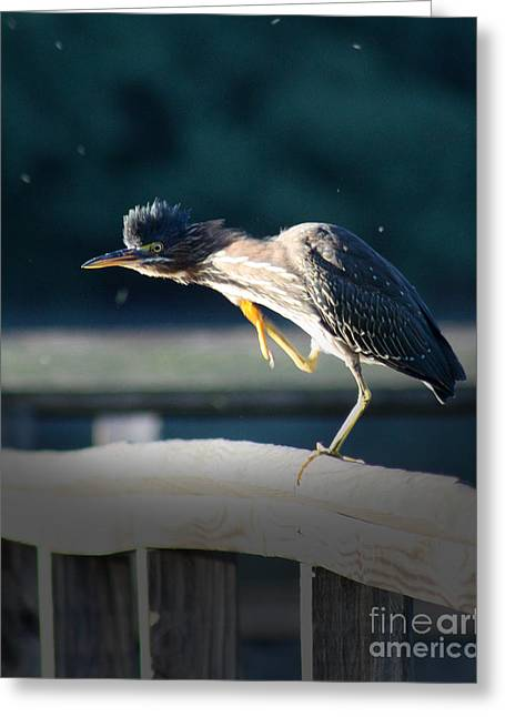 Ornithology Greeting Cards - Beautiful Green Heron Greeting Card by Anita Oakley