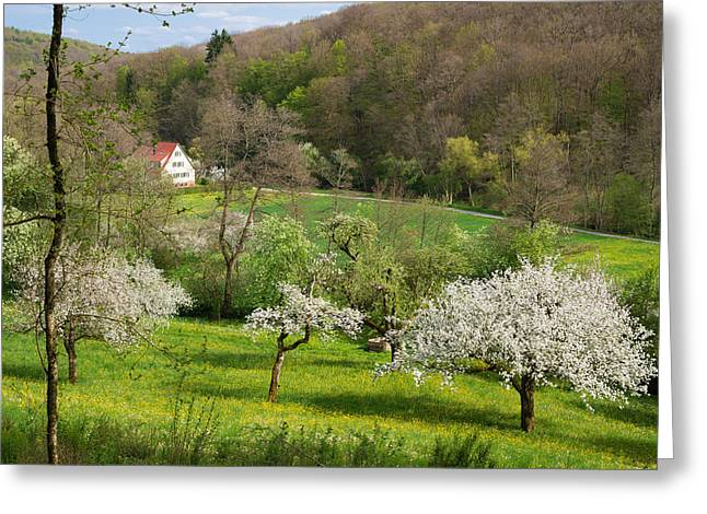Beautiful Green Spring Landscape Greeting Card by Matthias Hauser