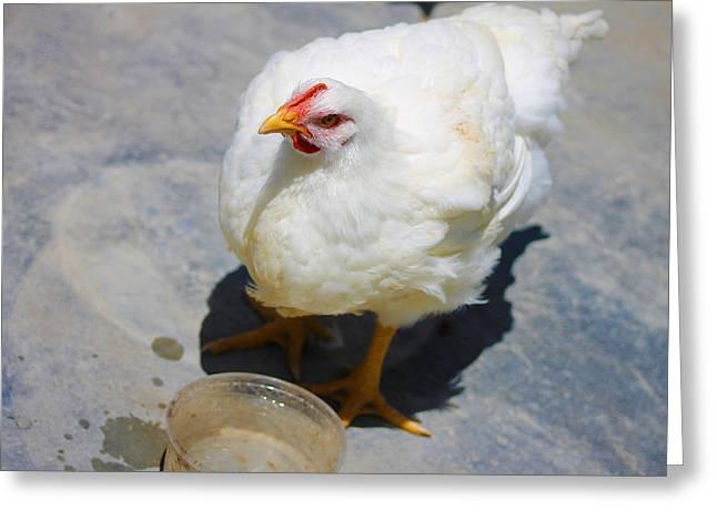 Peru Greeting Cards - Beautiful Hen Greeting Card by Pedro MC