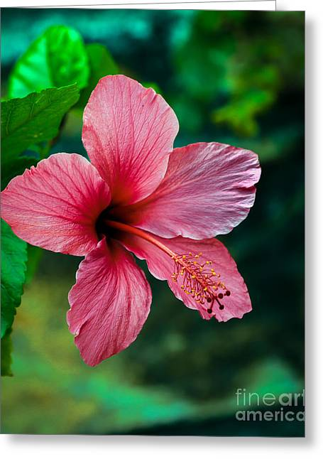 Beautiful Hibiscus Greeting Card by Robert Bales