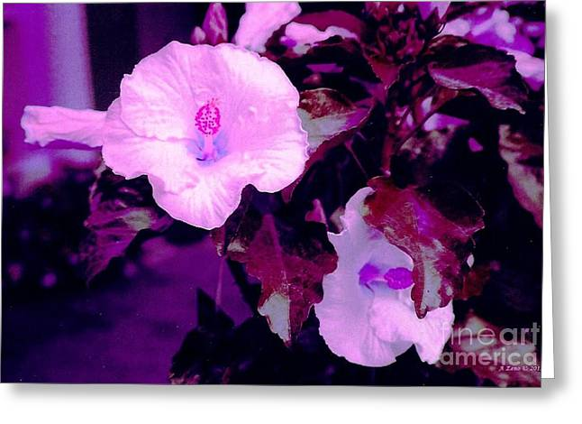 Haus Greeting Cards - Beautiful Hibiscuses Greeting Card by Annie Zeno
