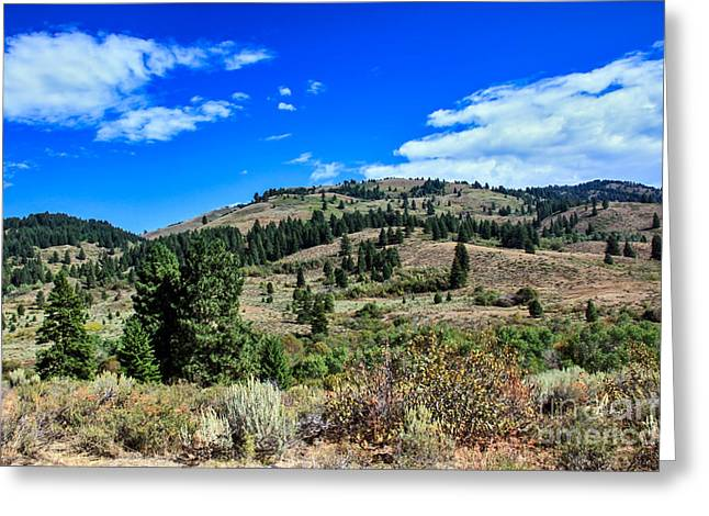 Idaho Scenery Greeting Cards - Beautiful Hillside Greeting Card by Robert Bales