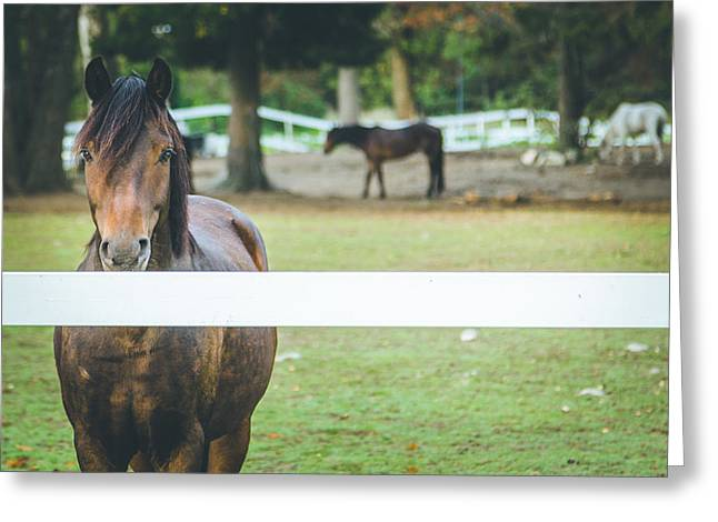 Beautiful Horse Behind A Farm Fence Greeting Card by Aldona Pivoriene