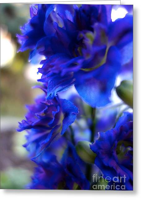 Sunday Stroll Greeting Cards - Beautiful In Blue Greeting Card by Jacqueline Athmann