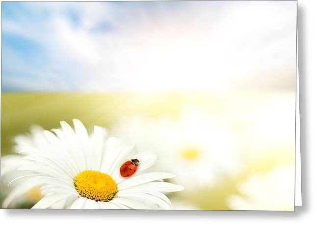 Beautiful Ladybug and beautiful flower Greeting Card by Boon Mee