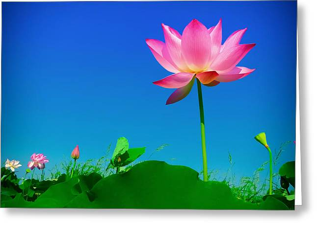 Ground Level Greeting Cards - Beautiful Lotus Greeting Card by Mountain Dreams