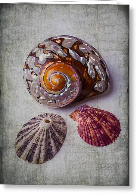 Shell Texture Greeting Cards - Beautiful Lovely Shells Greeting Card by Garry Gay