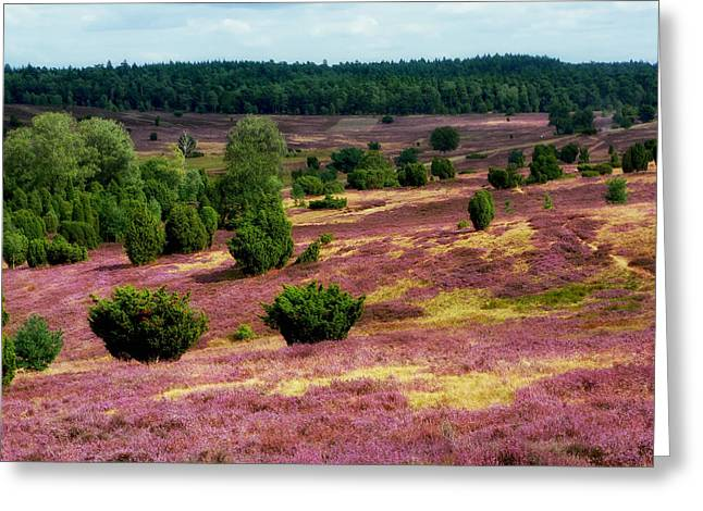 Heathland Greeting Cards - Beautiful Luneburg Heath Greeting Card by Mountain Dreams