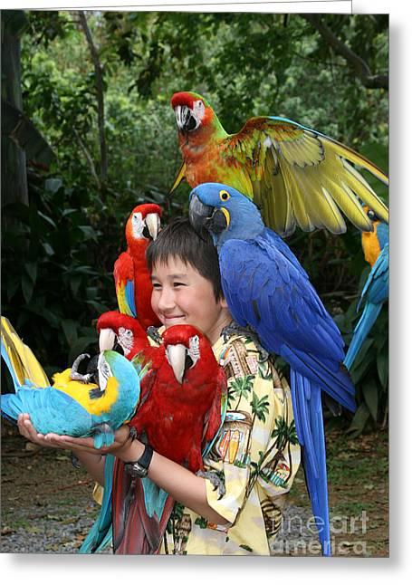 Hyacinth Macaw Greeting Cards - Beautiful Macaw - Garden of Eden Puohokamoa Valley Maui Hawaii Greeting Card by Sharon Mau