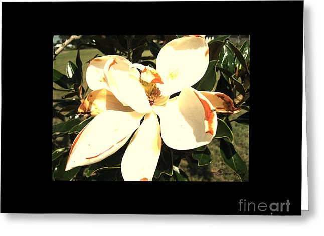 Blooms Greeting Cards - Beautiful Magnolia Greeting Card by Oksana Semenchenko