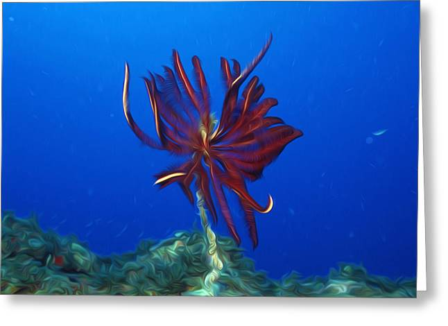 Beautiful marine plants 1 Greeting Card by Lanjee Chee
