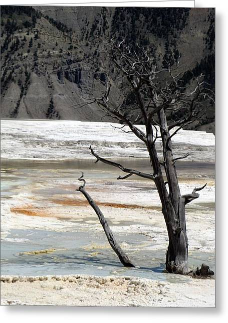 Land Love And Sky Greeting Cards - Beautiful Nature 4 Greeting Card by Nili Tochner