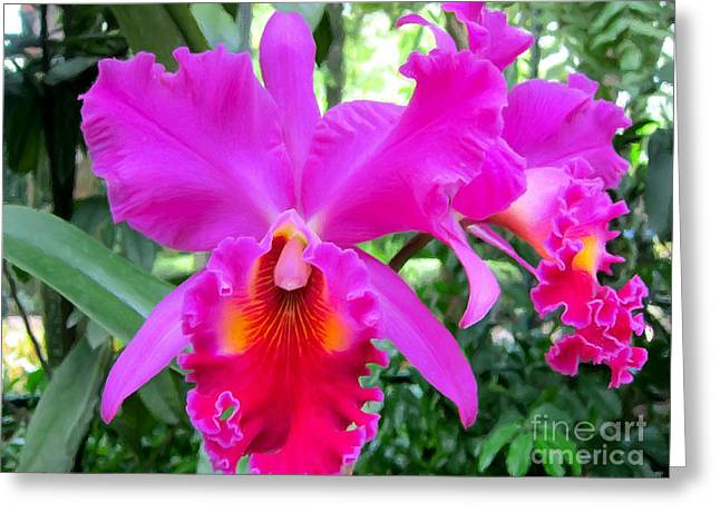 Stigma Greeting Cards - Beautiful orchid flower Greeting Card by Lanjee Chee