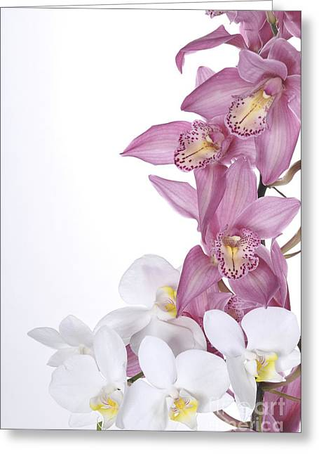 Moran Pyrography Greeting Cards - Beautiful Orchid Pink Greeting Card by Boon Mee