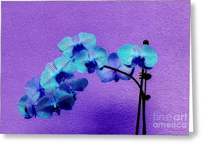 Recently Sold -  - Star Of Bethlehem Greeting Cards - Beautiful Orchids Greeting Card by Annie Zeno