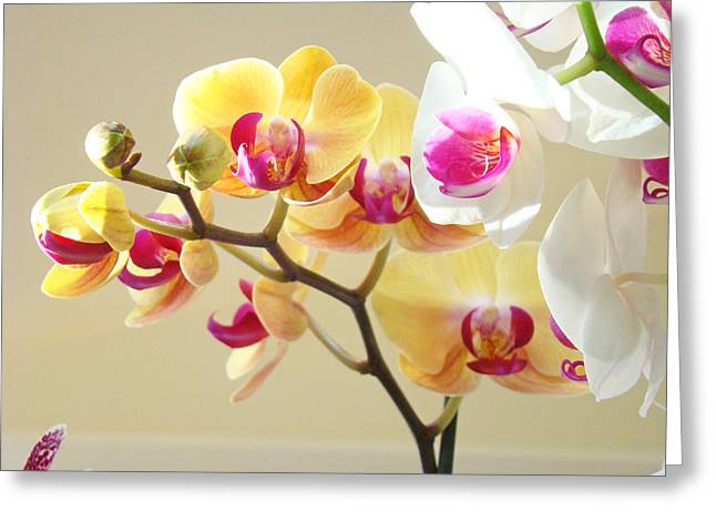 Flora Framed Prints Greeting Cards - Beautiful Orchids Floral art Prints Orchid Flowers Greeting Card by Baslee Troutman