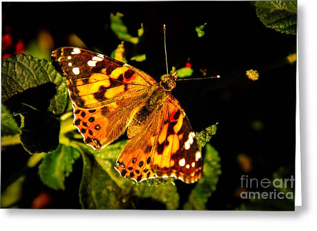 Bale Greeting Cards - Beautiful Painted Lady  Greeting Card by Robert Bales