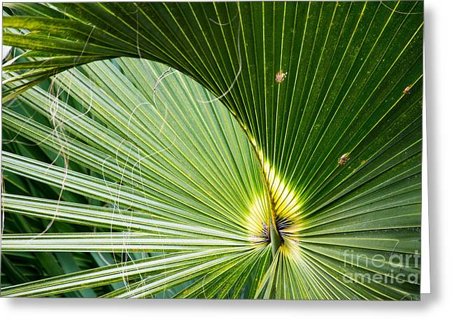 Green Day Greeting Cards - Beautiful palm leaf Greeting Card by Michael Bennett