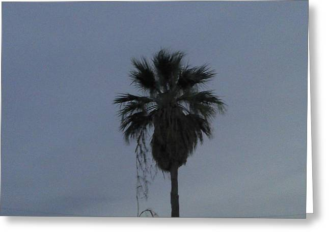 Beautiful Palm Tree Greeting Card by Rebekah Luper