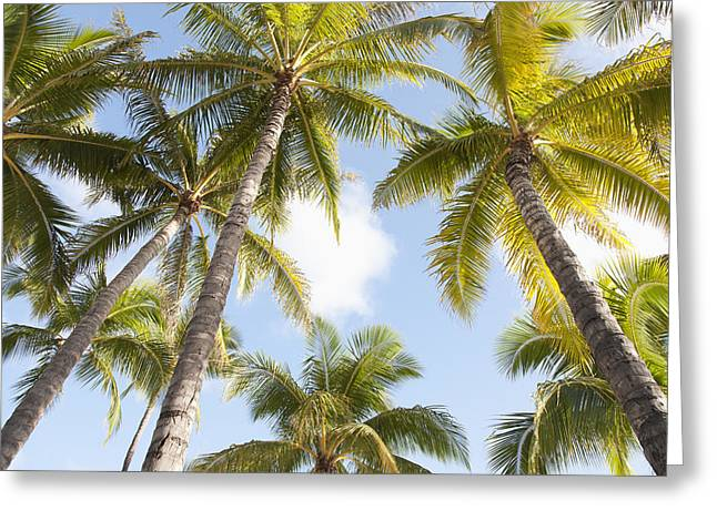 Beautiful Palms Greeting Card by Brandon Tabiolo