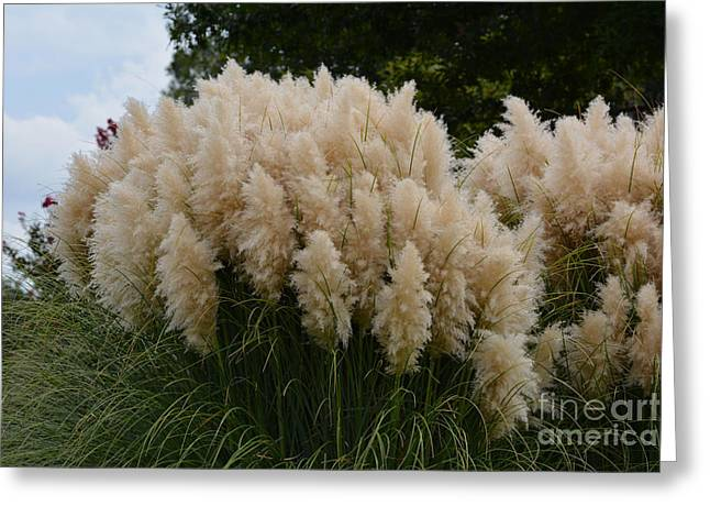 Ruth Housley Greeting Cards - Beautiful Pampas Grass Greeting Card by Ruth  Housley