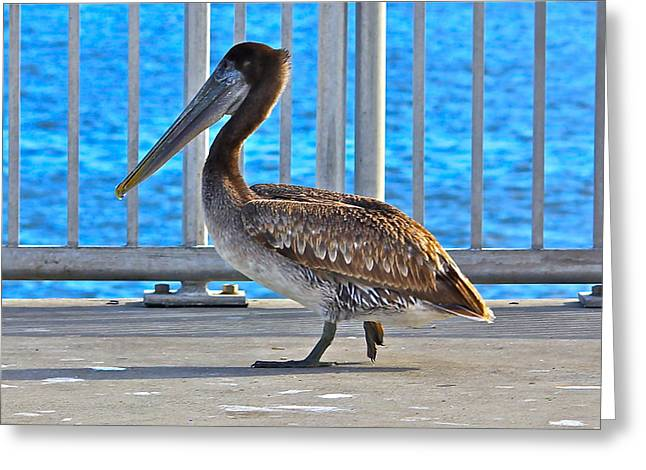 Cedar Key Greeting Cards - Beautiful Pelican Greeting Card by Lorna Maza