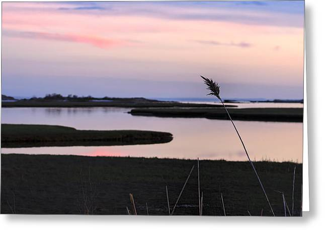 Reflections Of Sun In Water Greeting Cards - Beautiful pink and purple sunset over a New England tidal salt m Greeting Card by Marianne Campolongo