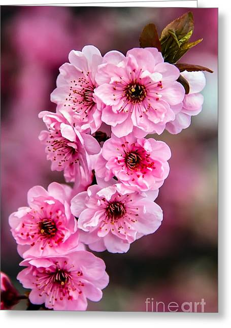 Beautiful Pink Blossoms Greeting Card by Robert Bales