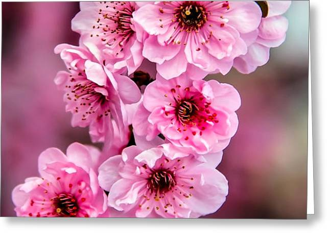 Beautiful Pink Blossoms Greeting Card by Robert Bales