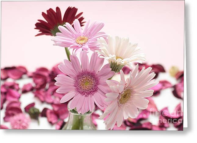 Desktop Pyrography Greeting Cards - Beautiful Pink Gerbera Greeting Card by Boon Mee