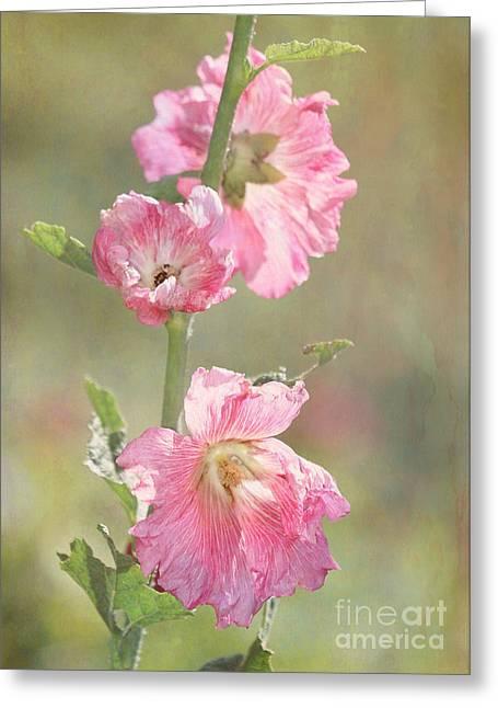Wets Palm Beach Greeting Cards - Beautiful Pink Hollyhock Flowers Greeting Card by Sabrina L Ryan