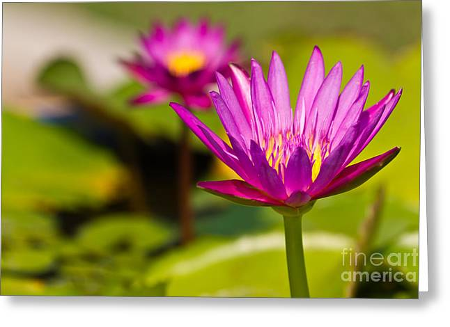 Green Beans Greeting Cards - Beautiful Pink Lotus Greeting Card by Tosporn Preede