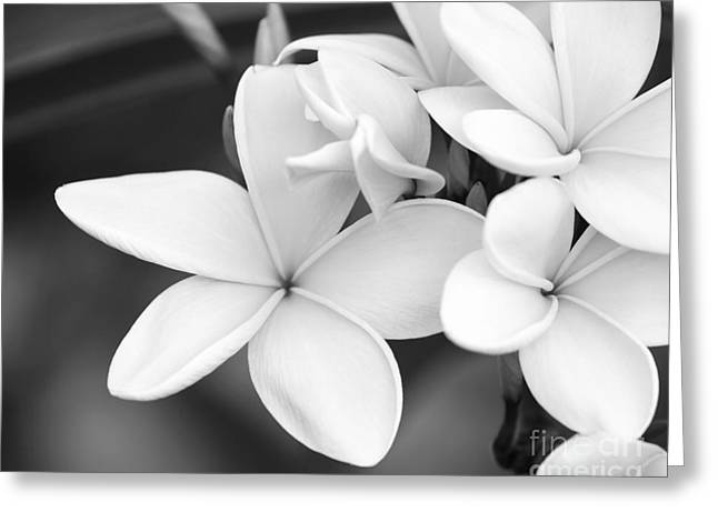 Florida Flowers Greeting Cards - Beautiful Plumeria in Black and White Greeting Card by Sabrina L Ryan
