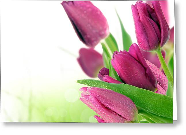 Transparent Pyrography Greeting Cards - Beautiful Purple Tulips  flower Greeting Card by Boon Mee