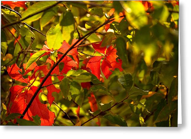 Red Fallen Leave Photographs Greeting Cards - Beautiful Red Greeting Card by Gloria Pasko