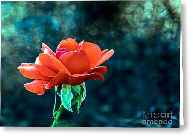 Haybales Greeting Cards - Beautiful Red Rose Greeting Card by Robert Bales