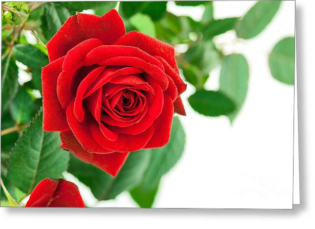 Beautiful Red Roses flower Greeting Card by Boon Mee