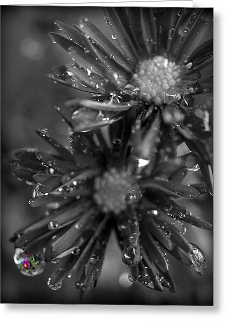 Reflections Digital Art Greeting Cards - Beautiful Reflection Greeting Card by Teri Schuster