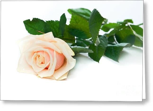 Beautiful Rose On White Greeting Card by Michal Bednarek