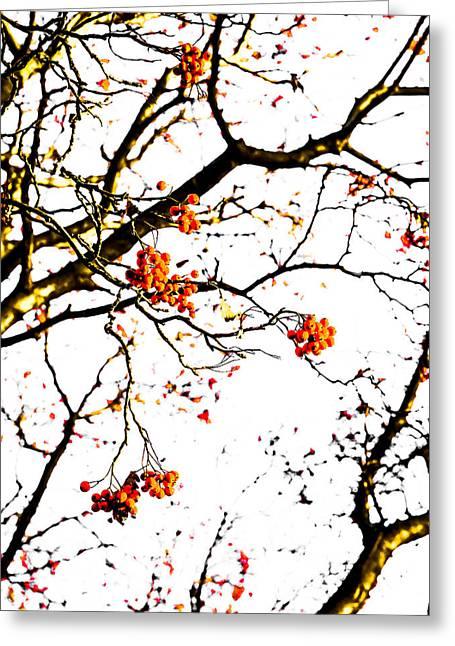 Black Berries Greeting Cards - Beautiful Rowan 7 - Square Greeting Card by Alexander Senin
